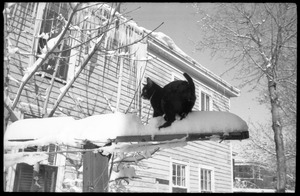 Thumbnail of Tuxedo cat standing atop a post after a heavy snow in front of a house with long         icicles