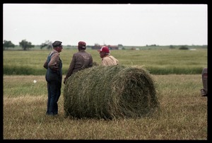 Thumbnail of Talk of the morning: three Kansas farmers took some time off from loading             alfalfa bales to talk about crops and weather Three farmers gathered around a round bale of alfalfa