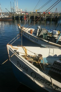 Thumbnail of Fishing boats (Blue Skies and BLue Ocean) moored in the harbor under blue skies, Provincetown
