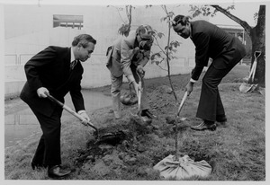 Thumbnail of Randolph W. Bromery planting tree with two unidentified men