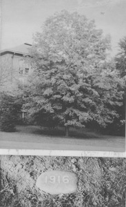 Thumbnail of Class of 1916 tree and stone marker