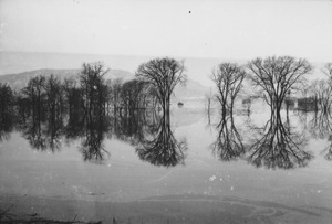 Thumbnail of Trees reflected on a floodplain