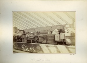 Thumbnail of Giant Squash in harness, Massachusetts Agricultural College