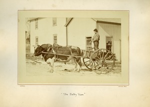 Thumbnail of Bulley team, Massachusetts Agricultural College