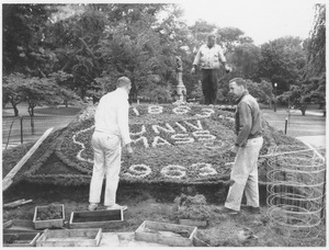 Thumbnail of Three unidentified men working on a planting display for the Centennial on Boston Common