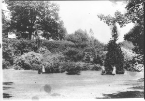Thumbnail of Rhododedron Garden, Massachusetts Agricultural College 13