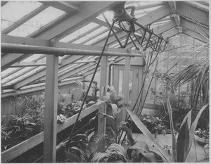 Thumbnail of ' Entomological hospital': Interior of the greenhouse attached to the Entomology Building