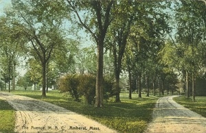 Thumbnail of The  Avenue