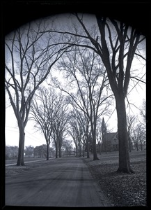 Thumbnail of Elm allee on Olmstead Road, looking south toward Old Chapel
