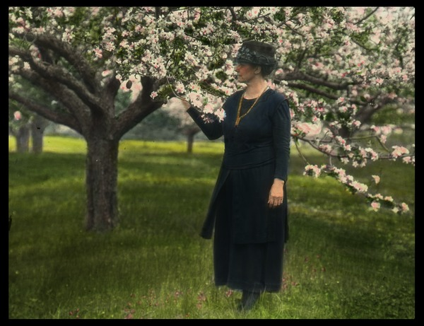 Bay Road Fruit Farm (woman near apple tree in blossom), undated