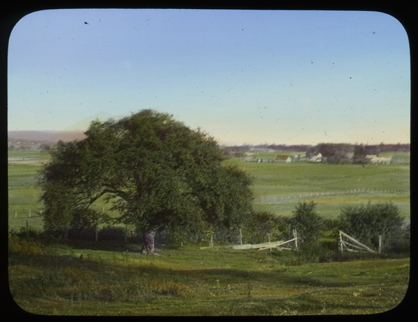 Mature Apple tree, fields and farm, undated