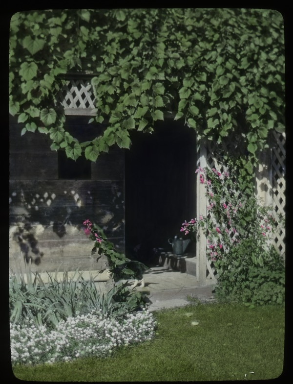Old Deerfield (trellis, grapevine?, alyssum, iris and other flowers), 1926