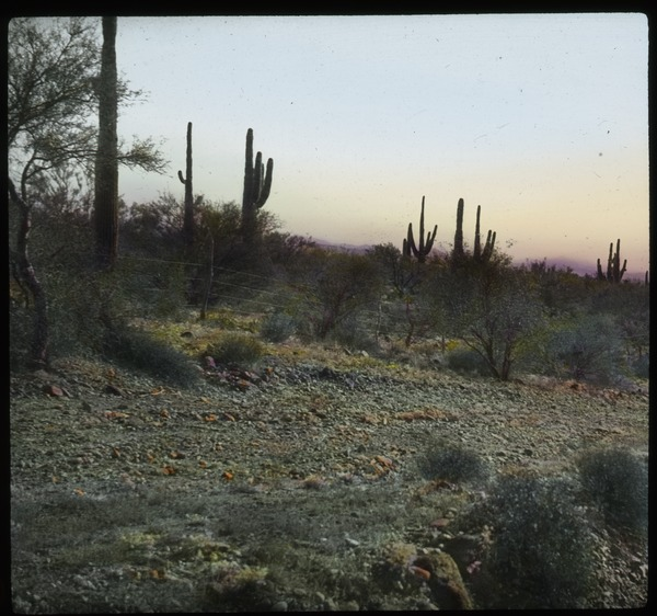 Cactus, shrubs, arid country side, undated