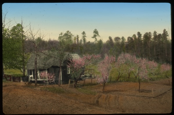 Pickens Co. S.CA.  (small gray house with small flowering trees), undated
