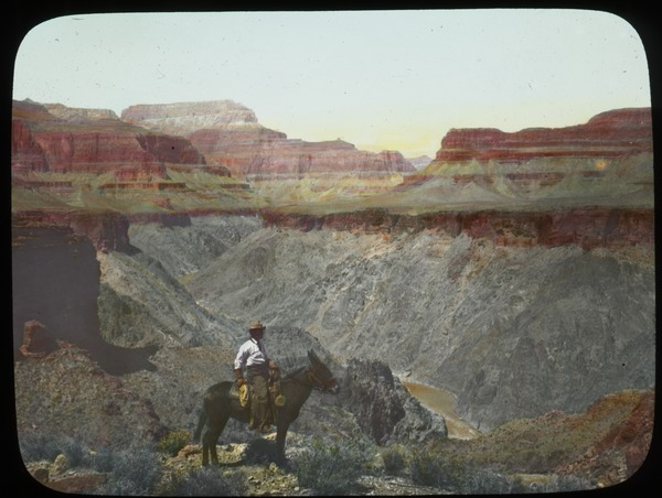 Man on Mule (Grand Canyon?), undated
