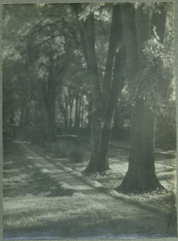 Tree-lined lane, ca. 1910