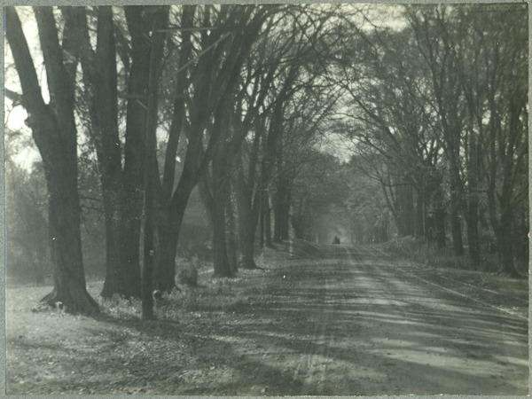 Tree-lined lane, with carriage in background, ca. 1910