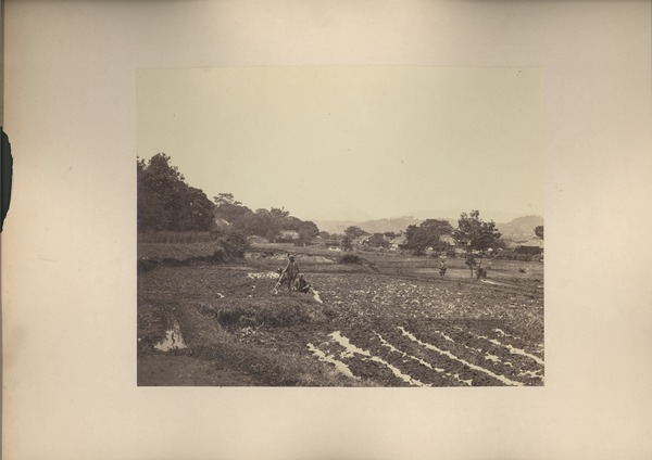 Farmers in agricultural field, ca. 1868