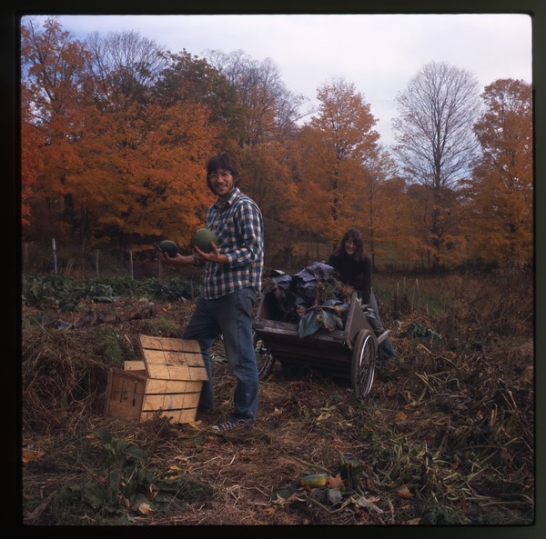 Two unidentified farmers picking vegetables, Motangue, October 1977