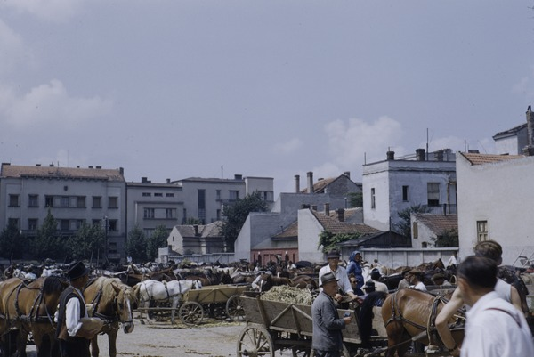 Livestock market, Belgrade, September 1953