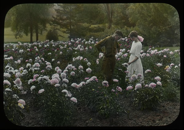 Young man and woman in a large peony garden, ca. 1918