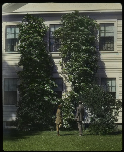 C. R. Elder: house with large climbing flowering vine, ca. 1925