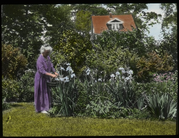 Mrs. Park- Amherst (elderly woman in garden tending iris kaempferi), undated