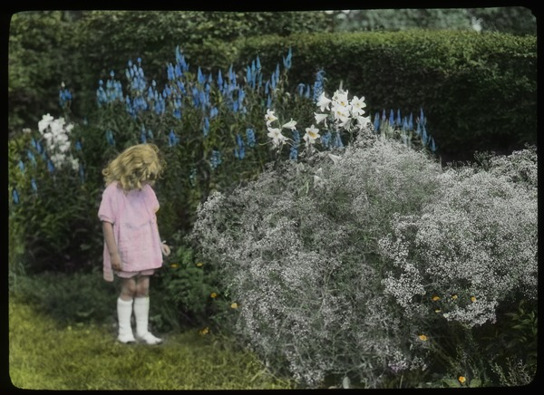 Child examining plantings of baby's-breath, lilies, delphinium, ca. 1925