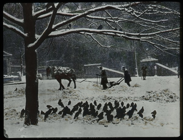 Boston Common (horse-drawn snowplow and pigeons), ca. 1925