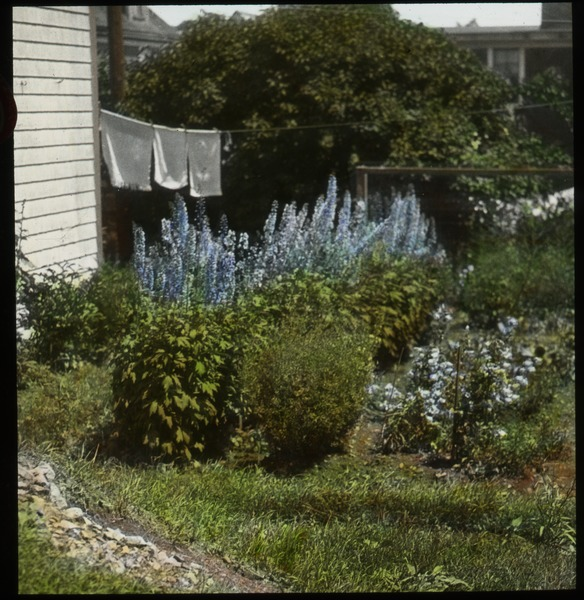 Eastport (private garden against house with drying laundry and  Delphiniums?), undated