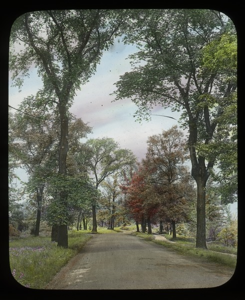 River Road west from west 25th Mississippi Park, Minneapolis, Minnesota (road lined with trees), undated