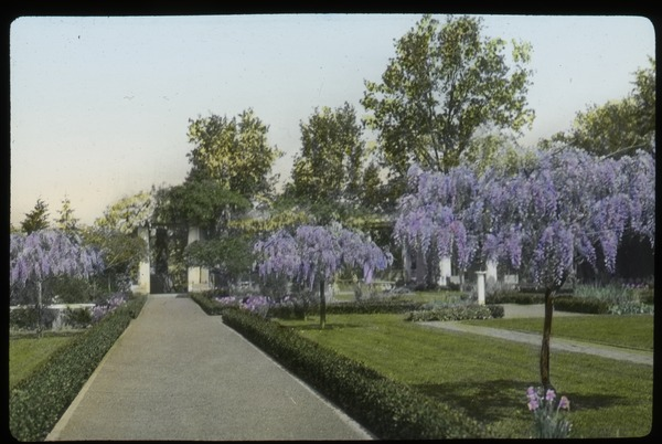 Rockville, CT (a formal garden path lined with purple flowered trees), undated