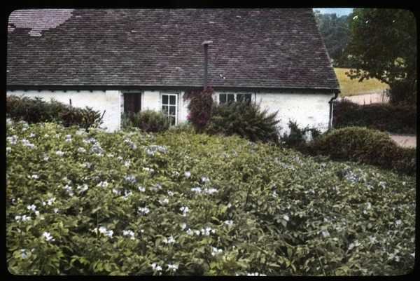 Cottage and potato field, 1936