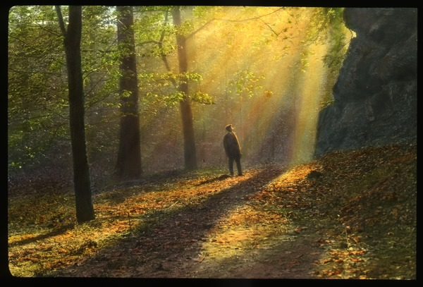 Man walking in the woods under rays of sunlight, ca. 1920