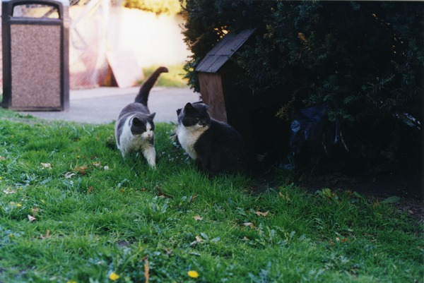 Ashes and the Dadcat, April 1998