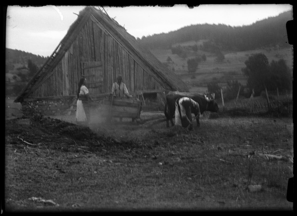Work: Carting manure: , ca. 1932