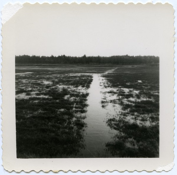 Duxbury Cranberry Company: bogs flooded in winter, ca. 1948