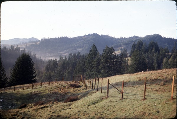 Serendipity Farm meadow looking northeast before planting of orchard, 1980
