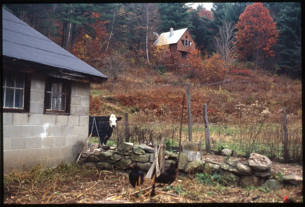 Cabin on hill with cow and chickens in foreground, Wendell Farm, October 1990
