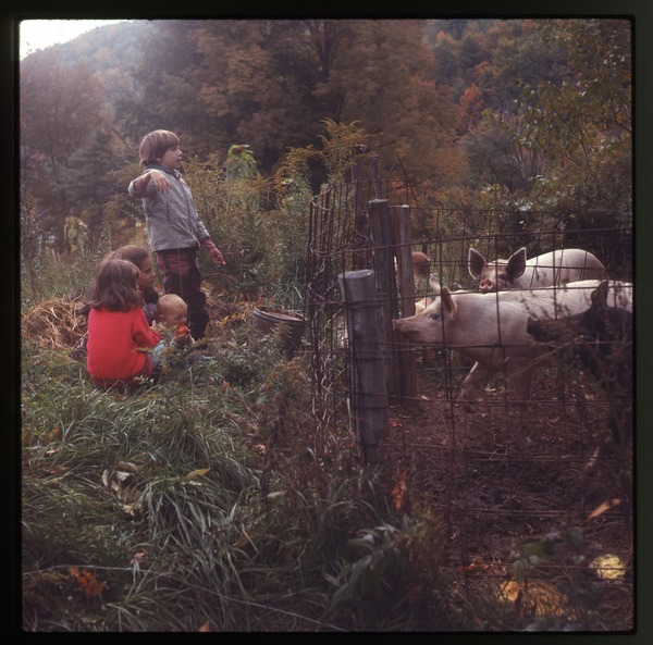 Children looking at pigs in a sty, Montague Farm Commune, December 1971