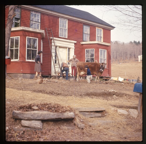 Nina Keller, her mother, and others, with a milk cow in front of the house,