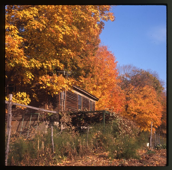 House and arbor in fall color, Montague Farm Commune, October 1977