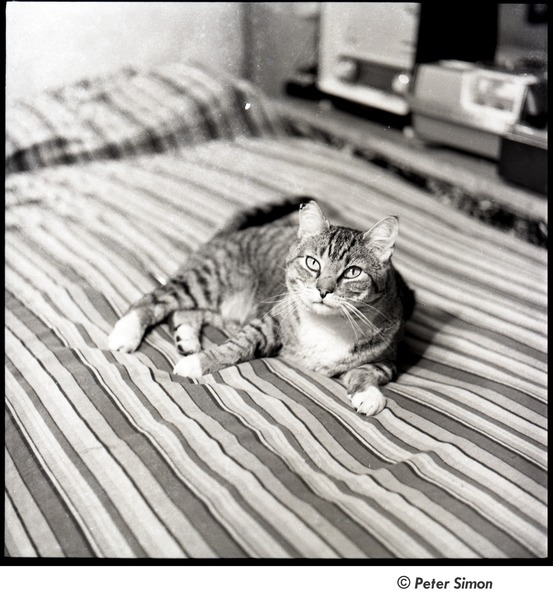 Cat on a bed, ca. 1962