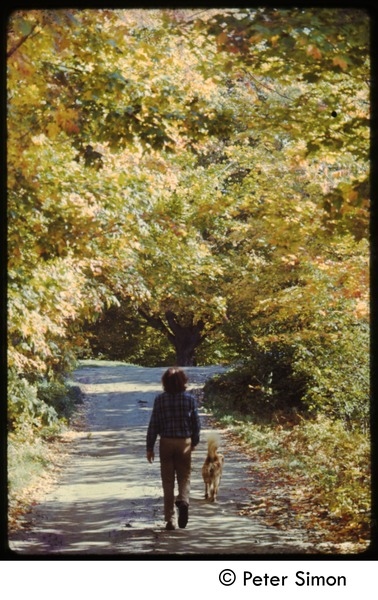 Walking with a dog down a tree-lined lane, Tree Frog Farm commune, ca. 1972