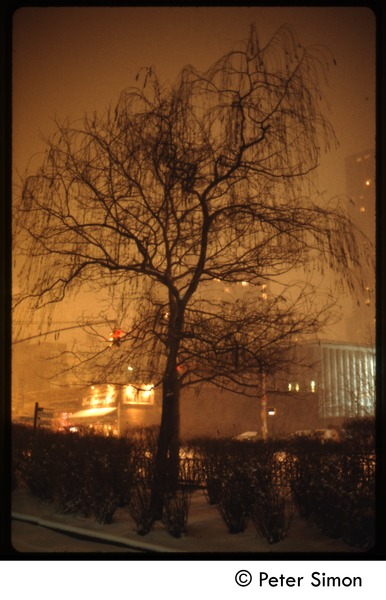 Street scene, New York City (?),  in heavy snow: Silhouette of tree under snow (amber light): , ca. 1980