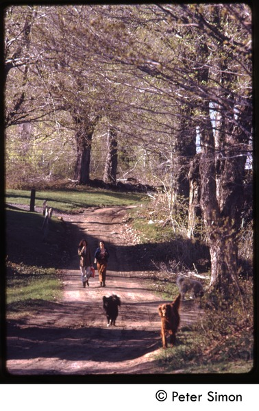 Women and two dogs walking down a dirt road, Tree Frog Farm Commune, ca. 1972