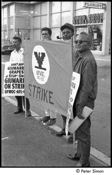 UFOWC grape pickers strike at Stop and Shop: protestors holding banner and signs with Stop and Shop storefront in background, September 20, 1967