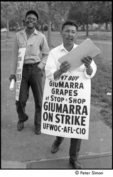 UFOWC grape pickers strike at Stop and Shop: protestors holding signs, September 20, 1967