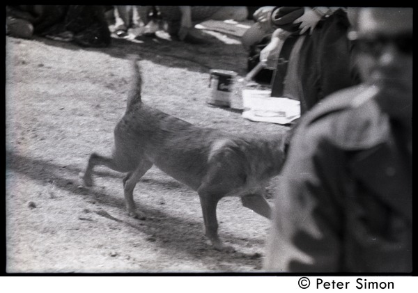 Resistance on the Boston Common: a dog wandering among the protesters, April 3, 1968
