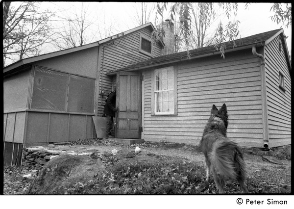 A  dog (Montague) watches Raymond Mungo enter the house, Packer Corners Commune, ca. October 30, 1968